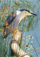 Watercolor Painting - Night Heron